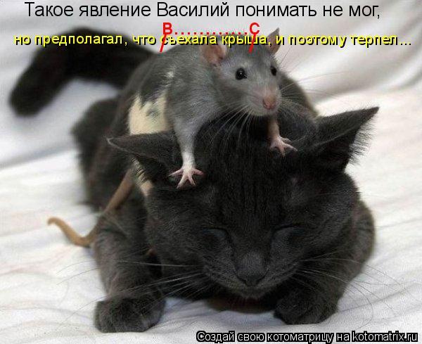 Котоматрица: Такое явление Василий понимать не мог, но предполагал, что съехала крыша, и поэтому терпел... /