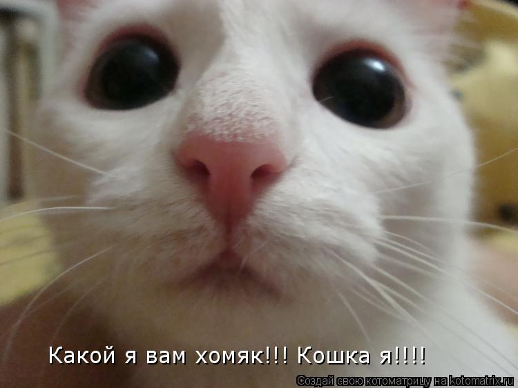 Котоматрица: Какой я вам хомяк!!! Кошка я!!!!