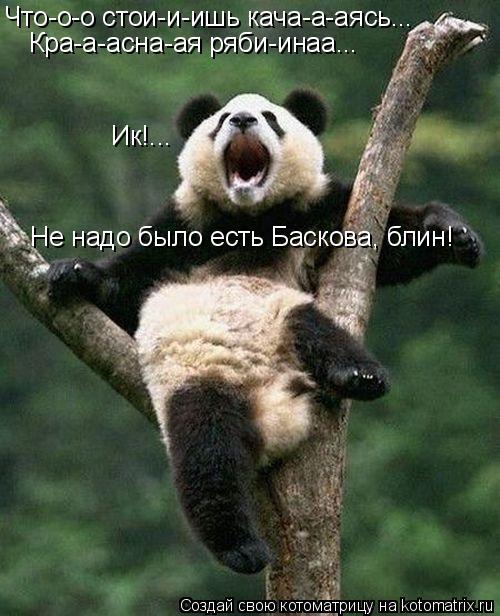 Котоматрица: Что-о-о стои-и-ишь кача-а-аясь... Кра-а-асна-ая ряби-инаа... Ик!... Не надо было есть Баскова, блин!