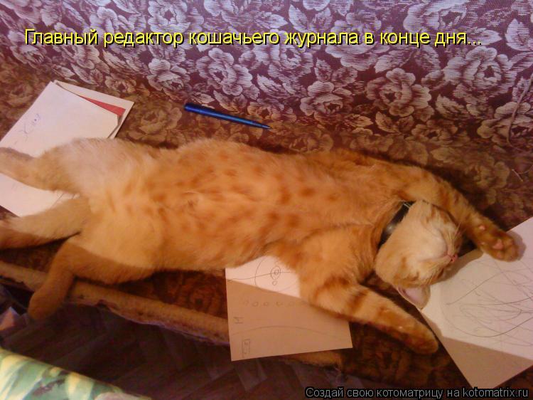 Котоматрица: Главный редактор кошачьего журнала в конце дня...