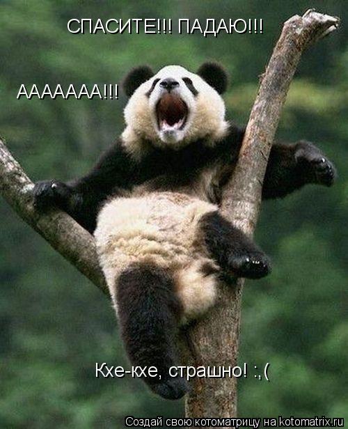 Котоматрица: СПАСИТЕ!!! ПАДАЮ!!!  СПАСИТЕ!!! ПАДАЮ!!!  Кхе-кхе, страшно! :,( ААААААА!!!