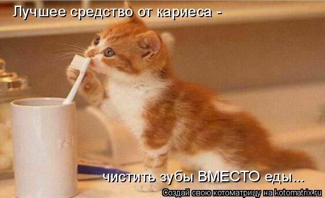 Котоматрица: Лучшее средство от кариеса -  чистить зубы ВМЕСТО еды...