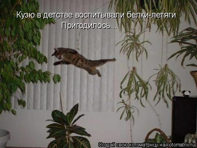 Котоматрица: Кузю в детстве воспитывали белки-летяги Пригодилось...