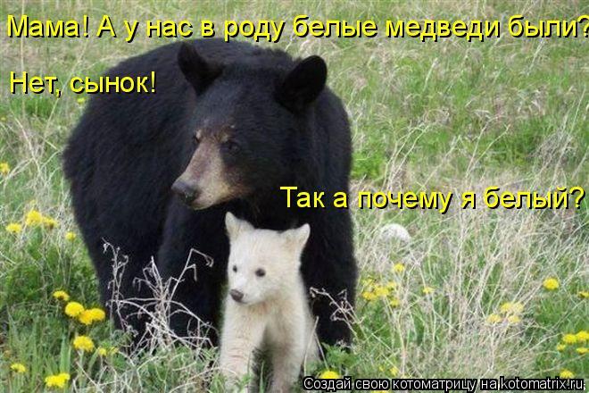 Котоматрица: Мама! А у нас в роду белые медведи были? Нет, сынок! Так а почему я белый?
