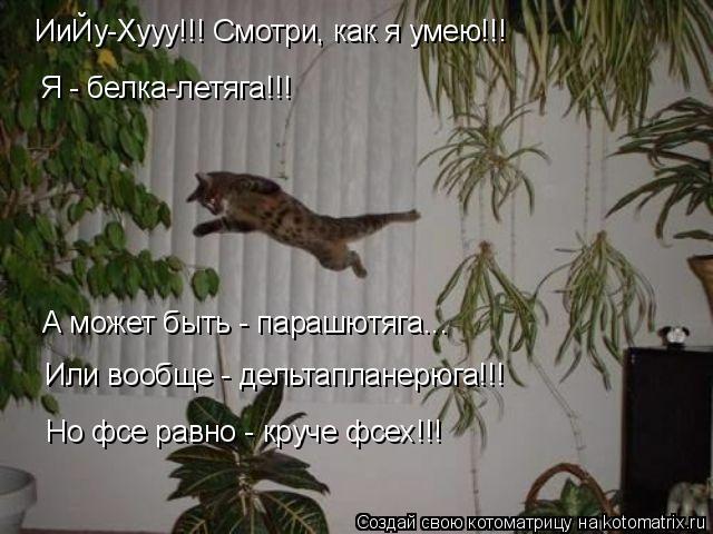 Котоматрица: Я - белка-летяга!!! А может быть - парашютяга... Или вообще - дельтапланерюга!!! Но фсе равно - круче фсех!!! ИиЙу-Хууу!!! Смотри, как я умею!!!