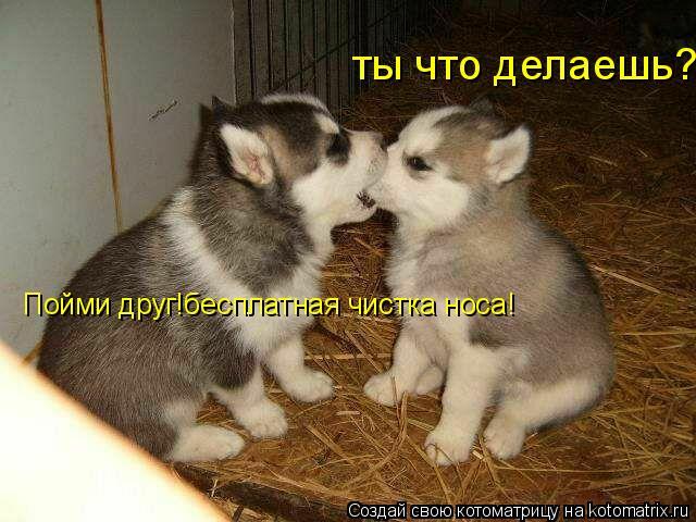 Котоматрица: ты что делаешь? Пойми друг!бесплатная чистка носа!