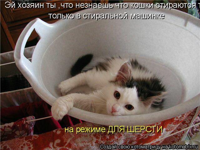 Котоматрица: Эй хозяин ты ,что незнаешь что кошки стираются только в стиральной машинке и на режиме ДЛЯ ШЕРСТИ  только в стиральной машинке   на режиме ДЛ