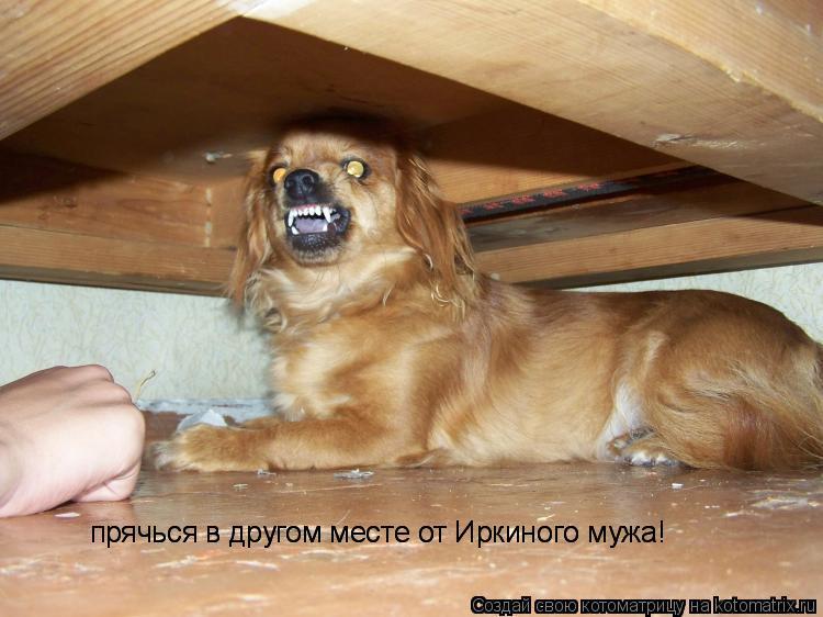 Котоматрица: прячься в другом месте от Иркиного мужа! прячься в другом месте от Иркиного мужа!