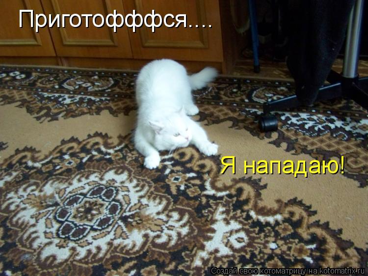 Котоматрица: Приготофффся.... Я нападаю!