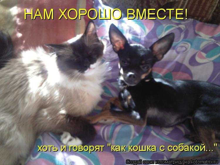 """Котоматрица: НАМ ХОРОШО ВМЕСТЕ! хоть и говорят """"как кошка с собакой..."""""""