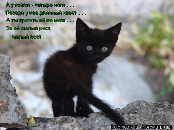 Котоматрица: А у кошки - четыре ноги . . . Позади у нее длинный хвост . . .  А ты трогать её не моги . . . За её малый рост, малый рост . . .