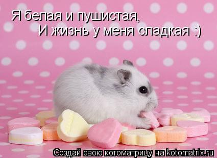 Котоматрица: Я белая и пушистая, И жизнь у меня сладкая :)