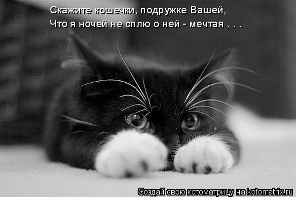Котоматрица: Скажите кошечки, подружке Вашей, Что я ночей не сплю о ней - мечтая . . .
