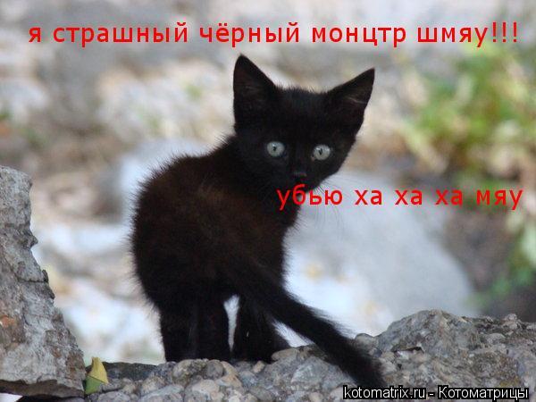 Котоматрица: я страшный чёрный монцтр шмяу!!! убью ха ха ха мяу