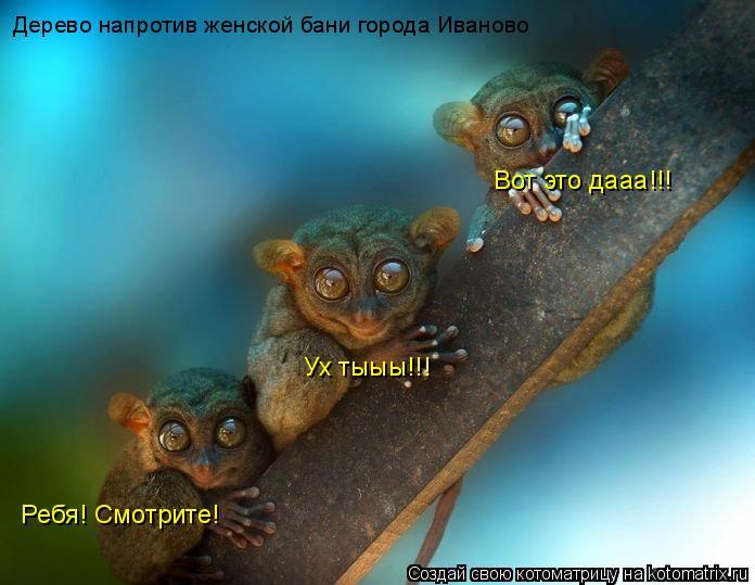 Котоматрица: Ребя! Смотрите!  Ух тыыы!!! Вот это дааа!!! Дерево напротив женской бани города Иваново