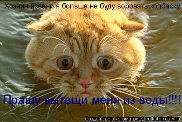 Котоматрица: Хозяин извени я больше не буду воровать колбаску Прашу вытащи меня из воды!!!!!