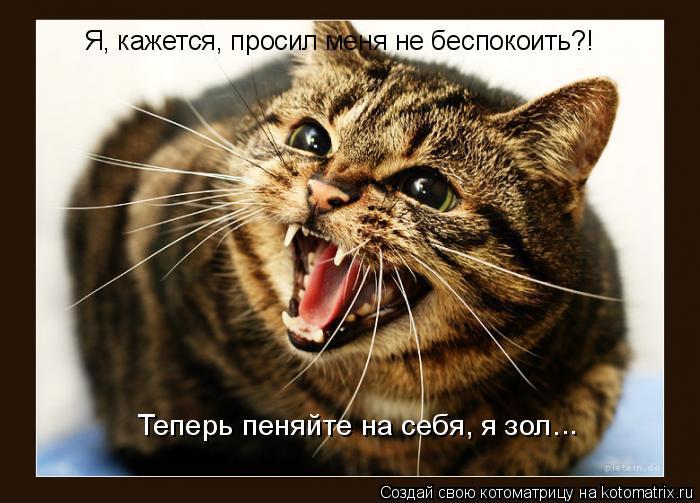 Котоматрица: Я, кажется, просил меня не беспокоить?! Теперь пеняйте на себя, я зол…  ..