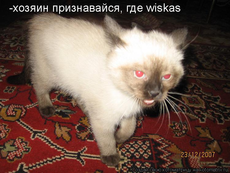Котоматрица: -хозяин признавайся, где wiskas