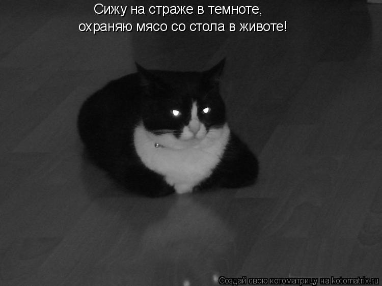 Котоматрица: Сижу на страже в темноте,  охраняю мясо со стола в животе!