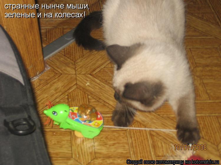 Котоматрица: странные нынче мыши,  зеленые и на колесах!