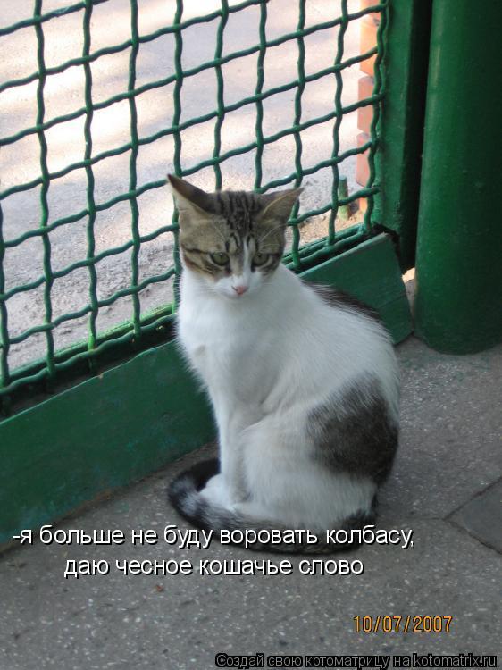 Котоматрица: -я больше не буду воровать колбасу, даю чесное кошачье слово