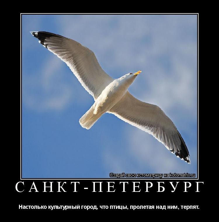 Котоматрица: САНКТ-ПЕТЕРБУРГ Настолько культурный город, что птицы, пролетая над ним, терпят.