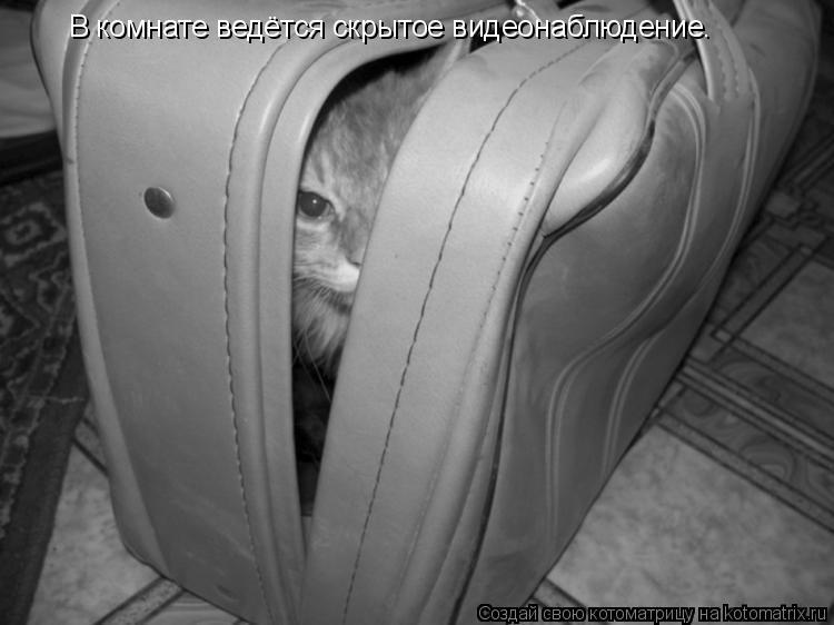 Котоматрица: В комнате ведётся скрытое видеонаблюдение.