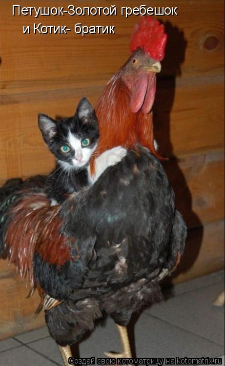 Котоматрица: Петушок-Золотой гребешок  и Котик- братик