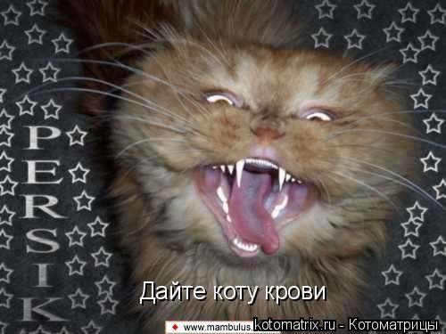 Котоматрица: Дайте коту крови