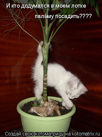 Котоматрица: И кто додумался в моем лотке пальму посадить????