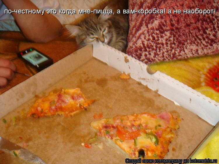Котоматрица: по-честному это когда мне-пицца, а вам-коробка! а не наоборот!