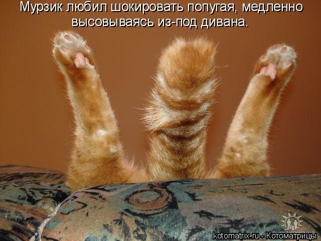 Котоматрица: Мурзик любил шокировать попугая, медленно высовываясь из-под дивана.