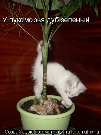 Котоматрица: У лукоморья дуб зеленый....