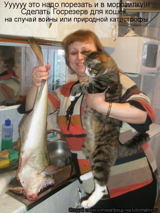 Котоматрица: Уууууу это надо порезать и в морозилку!!! Сделать Госрезерв для кошек,  на случай войны или природной катастрофы.
