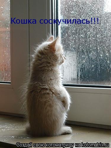 Котоматрица: Кошка соскучилась!!!