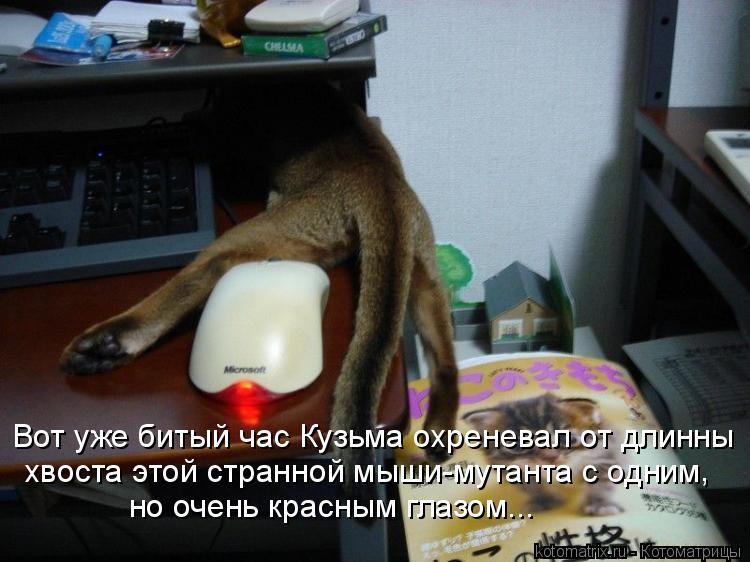 Котоматрица: Вот уже битый час Кузьма охреневал от длинны хвоста этой странной мыши-мутанта с одним но очень красным глазом... ,
