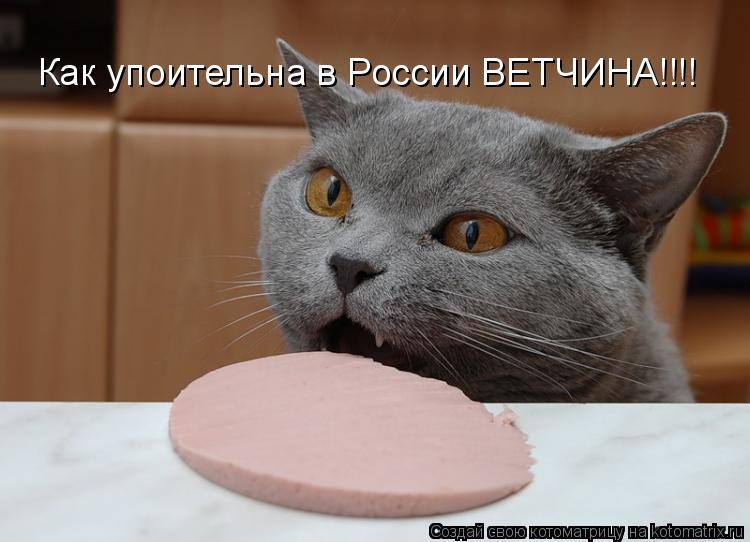 Котоматрица: Как упоительна в России ВЕТЧИНА!!!!