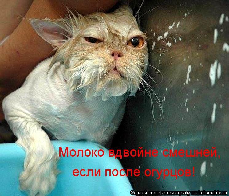 Котоматрица: Молоко вдвойне смешней, если после огурцов!