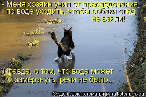 Котоматрица: - Меня хозяин учил от преследования по воде уходить, чтобы собаки след не взяли!  Правда, о том, что вода может замёрзнуть, речи не было...