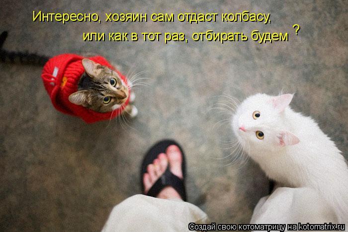 Котоматрица: Интересно, хозяин сам отдаст колбасу,  или как в тот раз, отбирать будем ?