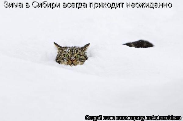 Котоматрица: Зима в Сибири всегда приходит неожиданно