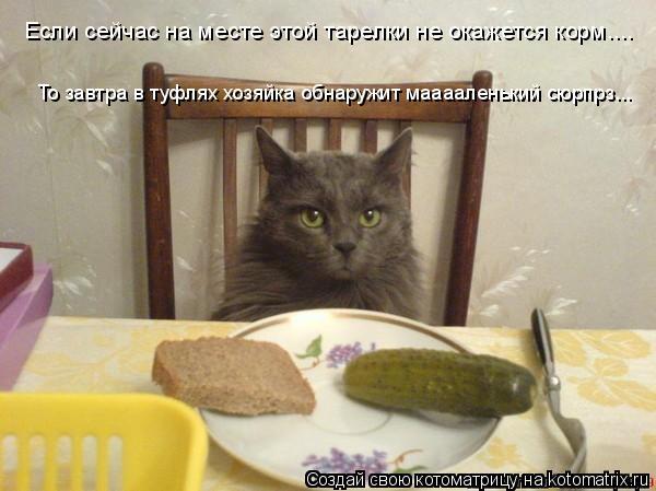 Котоматрица: Если сейчас на месте этой тарелки не окажется корм.... То завтра в туфлях хозяйка обнаружит мааааленький сюрпрз...