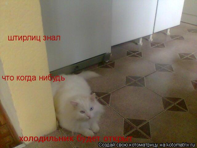 Котоматрица: штирлиц знал  что когда нибудь  холодильник будет открыт