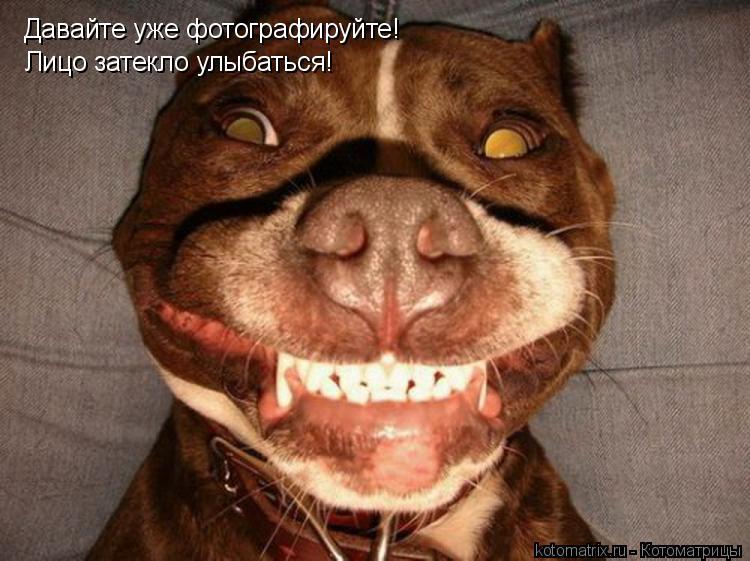 Котоматрица: Давайте уже фотографируйте! Лицо затекло улыбаться!
