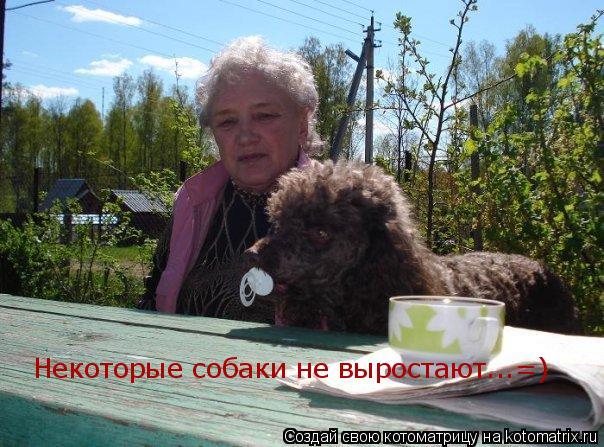 Котоматрица: Некоторые собаки не выростают...=)