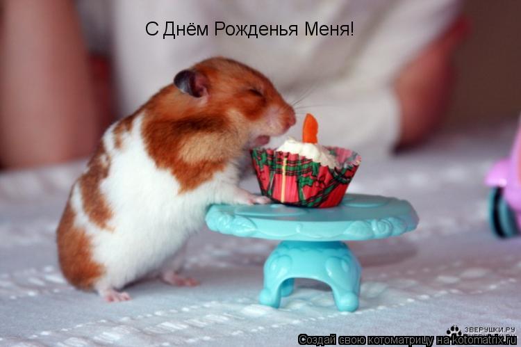 Котоматрица: С Днём Рожденья Меня!