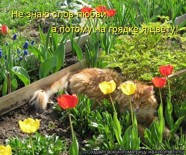 Котоматрица: Не знаю слов любви, а потому на грядке я цвету!