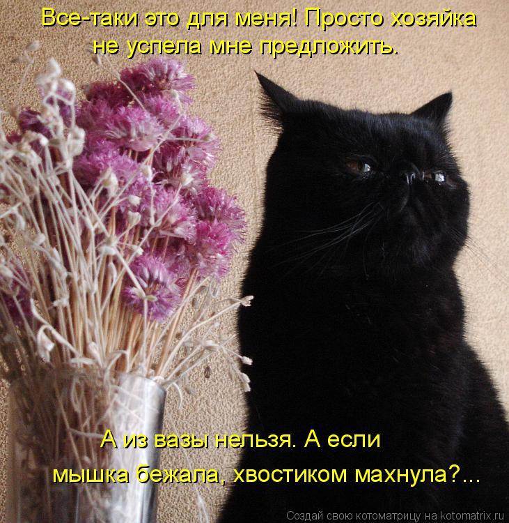 Котоматрица: Все-таки это для меня! Просто хозяйка  не успела мне предложить.   мышка бежала, хвостиком махнула?...  А из вазы нельзя. А если