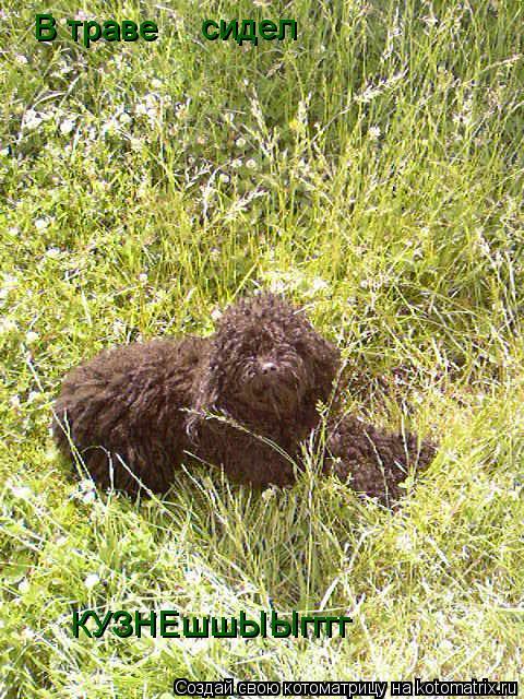 Котоматрица: В траве  сидел  КУЗНЕшшЫЫгггг