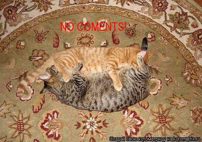 Котоматрица: NO COMENTS!